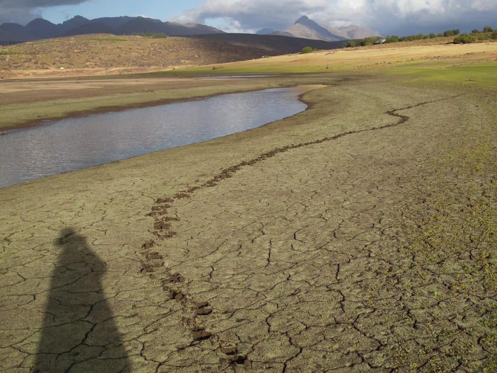 Food prints in the soft silt mud on the dry Clanwilliam Dam